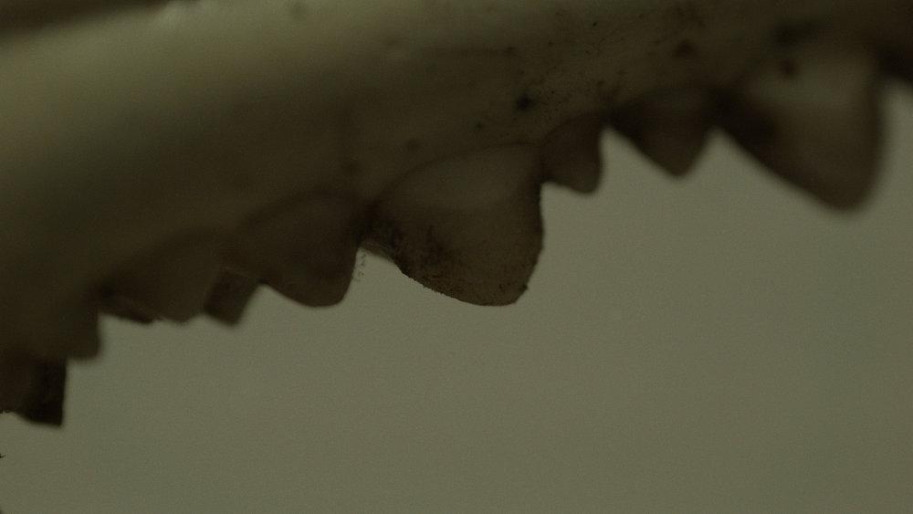 Macro_Crab_Legs_Stills_4.jpg