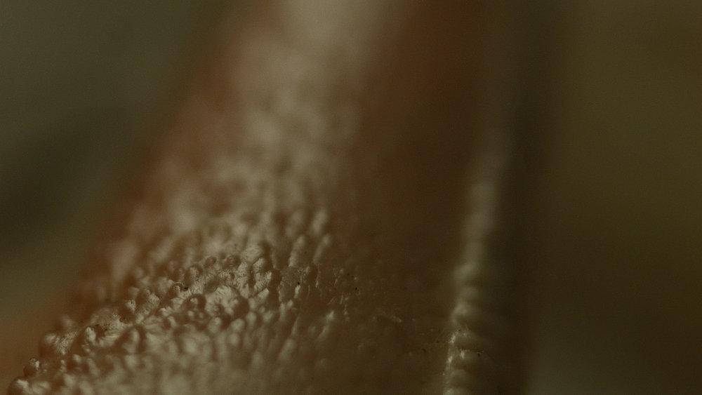 Macro_Crab_Legs_Stills_10.jpg