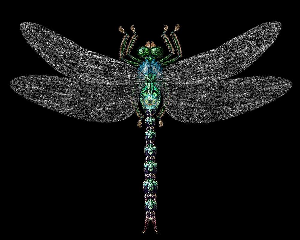03 Dragonfly 1200px.jpg