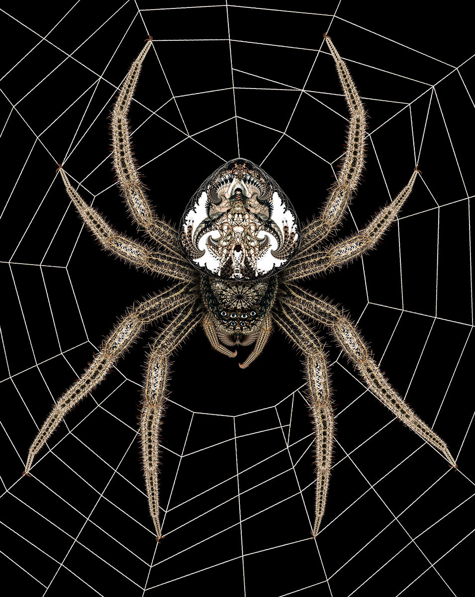05 Spider - Caught in Her Web 1200px.jpg