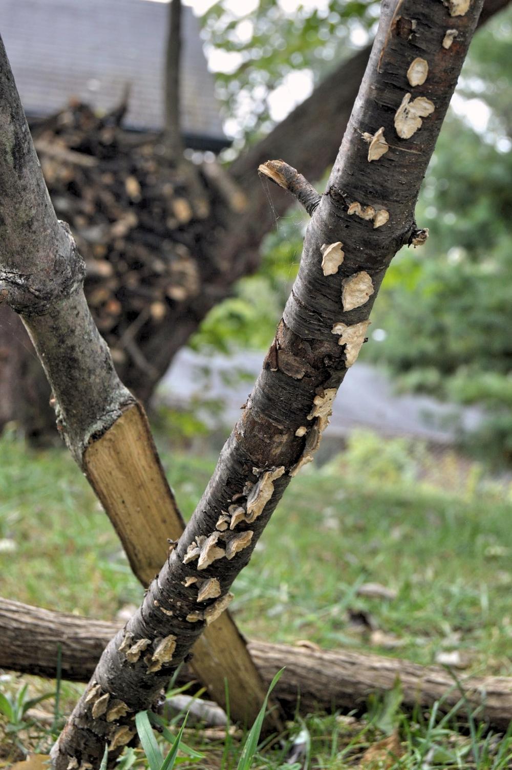 barkdetail.jpg
