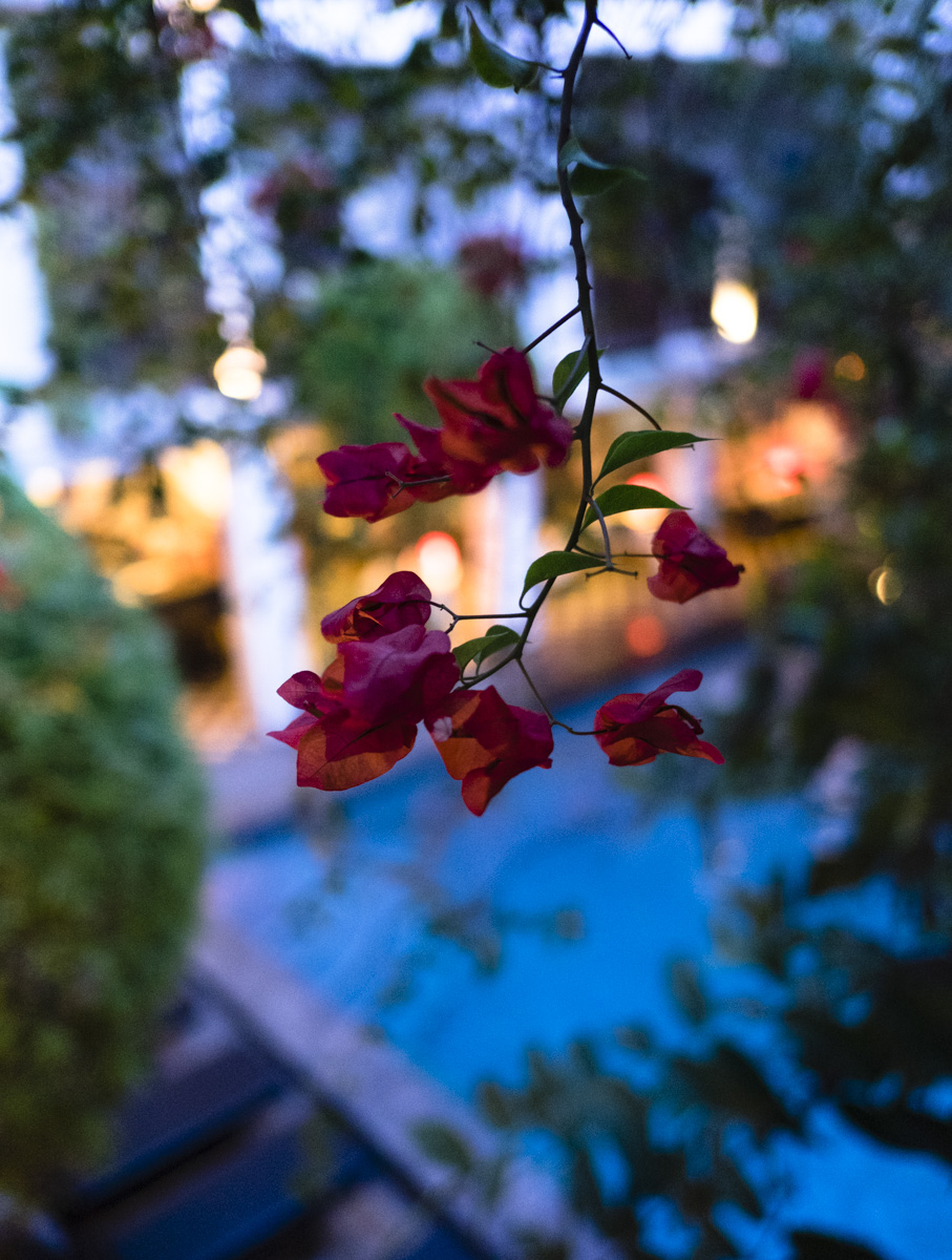 Beautiful Bougainvillea, Rambutan Resort. Siem Reap, Cambodia.