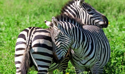 Swaziland_Wildlife_ss_601.jpg