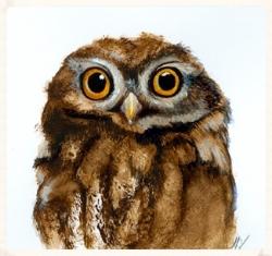 MG1307b_Owl.jpg