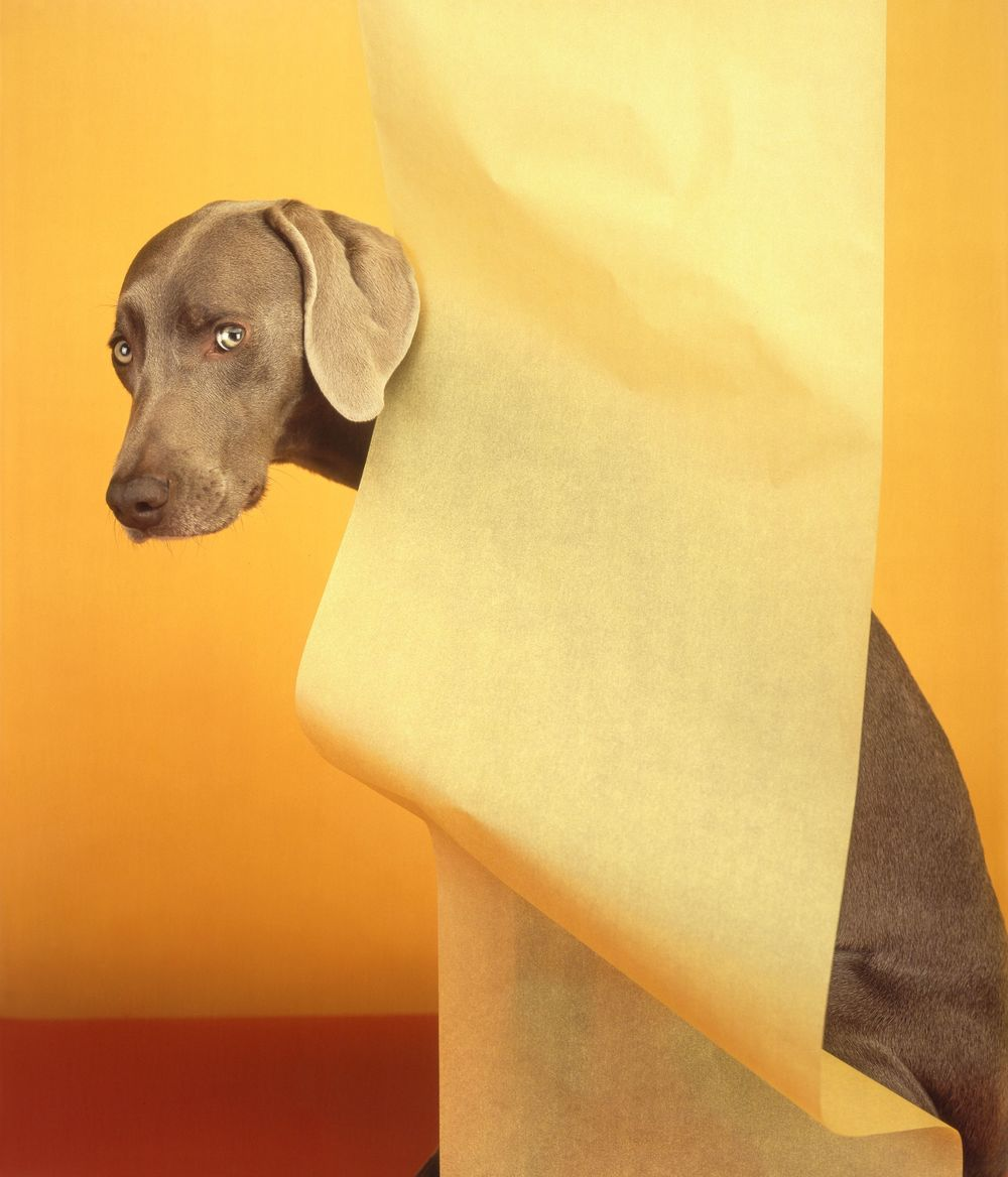 "William Wegman The Wave, 2005 ed. 14 of 30 Pigment print 11"" x 8.5"" Retail Value: $750 Opening Bid: $325"