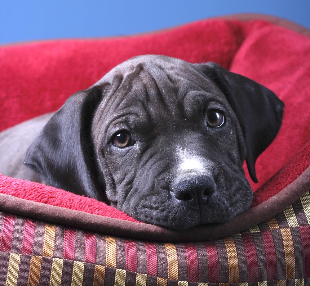 -1207_VOTS Puppies_028 copy.jpg