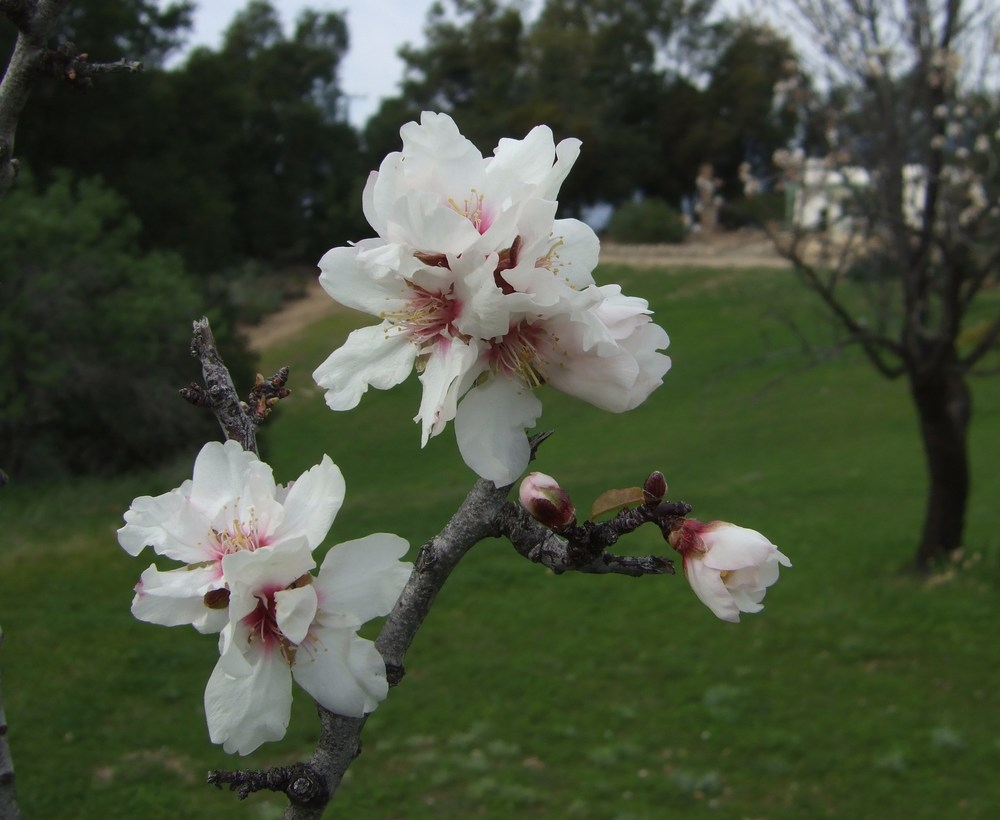 FLOWERS BLOOM in the Spring at Meher Mount. (Wayne Myers photo, 2010.)