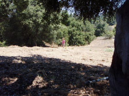 MARGARET MAGNUS is standing in the general area of the Meher Mount septic system before the actual tank was found. (Sam Ervin photo, 2010.)