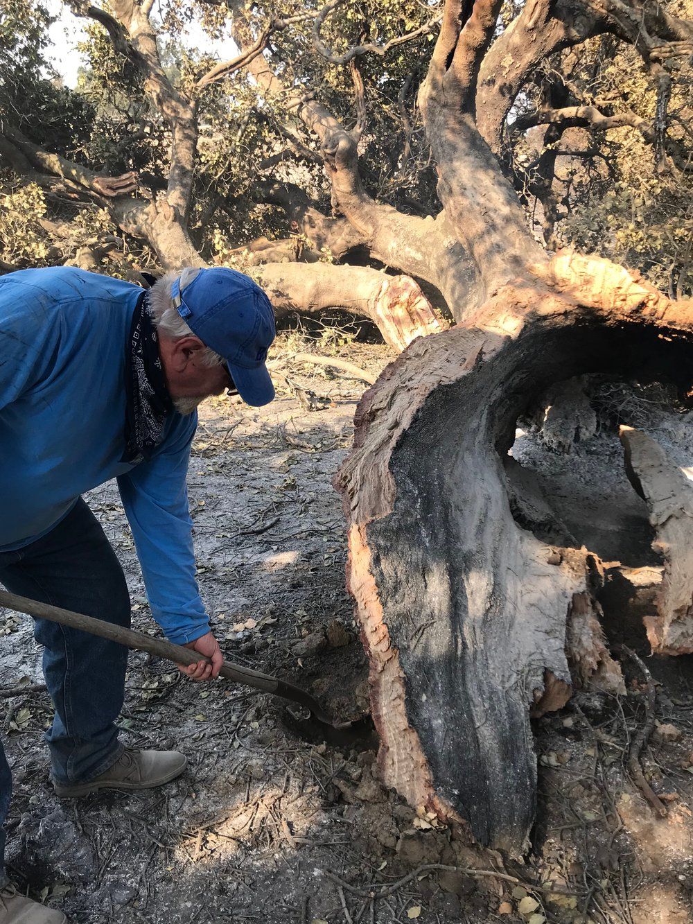MANAGER/CARETAKER BUZZ GLASKY puts out smoldering hot spots near Baba's Tree. (Photo: Ginger Glasky, December 6, 2017)