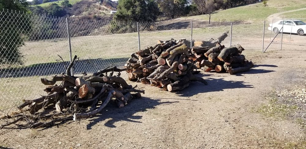 WOOD HARVESTED from Baba's Tree early in February 2018. Volunteers are needed to move (with the help of a tractor) and store this wood at another spot on the property. (Photo: Margaret Magnus, February 7, 2018)