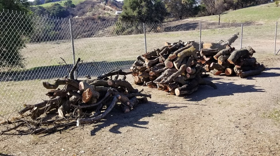 LOGS HARVESTED from Baba's Tree in early February 2018 that need to be moved to the storage area. (Photo: Margaret Magnus, February 7, 2018)
