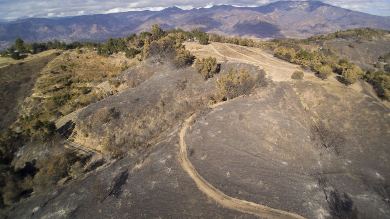 AN AERIAL VIEW of some of the damage at Meher Mount from the December 2017 Thomas Fire. The road/trail goes from Avatar's Point - where Baba's Tree is located - to the Prasad Orchard. (Drone Photo: Russell Latimer, January 4, 2018)