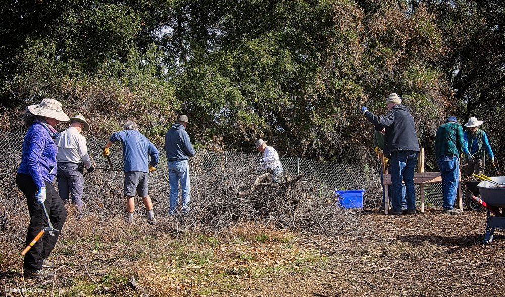 THE FALLEN LIMBS AND BRANCHES of Baba's Tree at Meher Mount are being harvested and cut into 1,200  dhuni -sized sticks to send to other Meher Baba groups for their  dhuni . (Left to right): Agnes Montano, Sam Ervin, Kyle Morrison, Jim Whedon, Jim Whitson, David Trombley, Fred Stankus, David Springhorn, and Kristina Somma. (Photo: Juan Mendez, January 12, 2019)