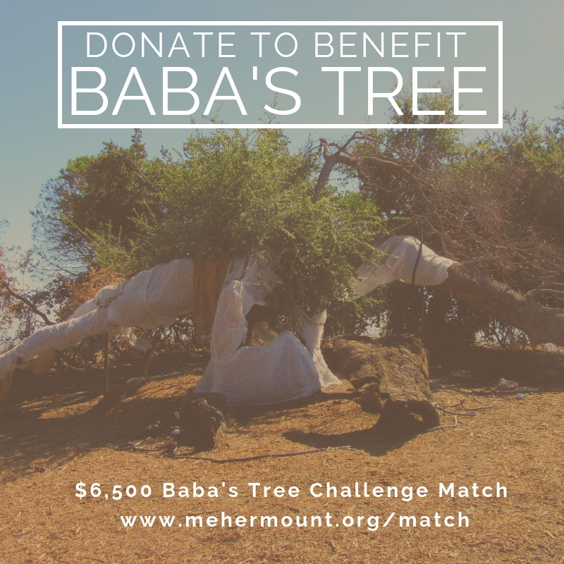 BABA'S TREE has new growth after the December 2017 Thomas Fire thanks to the donations supporting the recovery and regeneration of Baba's Tree. It's time for Phase II of Baba's Tree Care & Preservation. You can support the regeneration for Baba's Tree and preservation of the wood from the fallen parts of Baba's Tree (not pictured) with your donation.   The $6,500 Baba's Tree Challenge Match means your donation - when made between January 15 and April 15 - will be matched dollar-for-dollar up to $6,500. Act now to automatically double your donation.