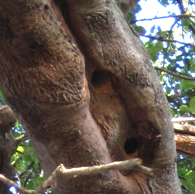 Woodpecker Hole 2 - Eric+Turk - 2013 - Baba's Tree.png