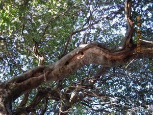 Woodpecker Hole 4 - Eric Turk - 2013- Baba's Tree - WEB.jpg
