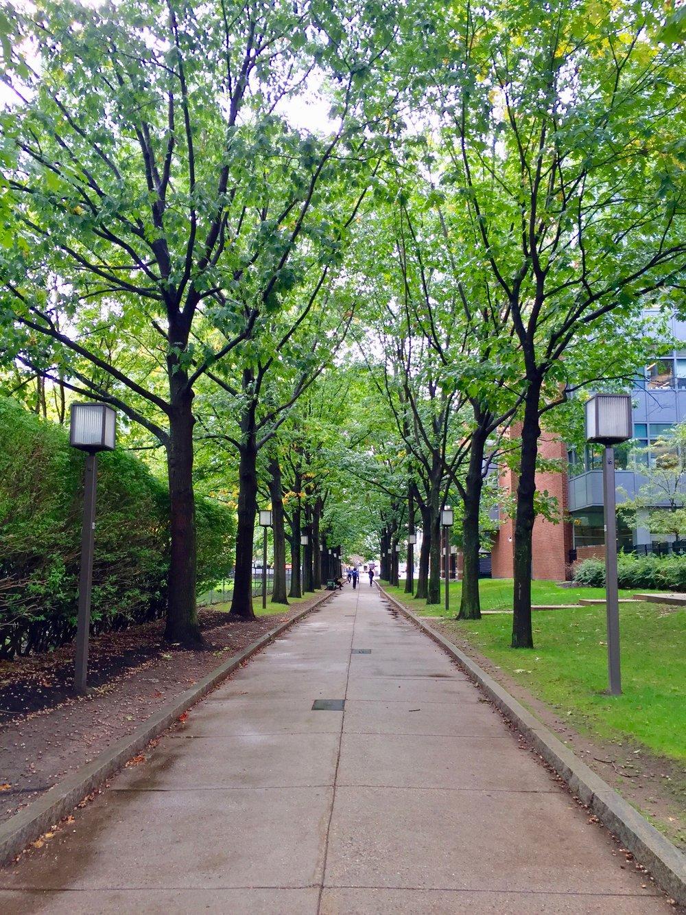 Loughrey Walkway