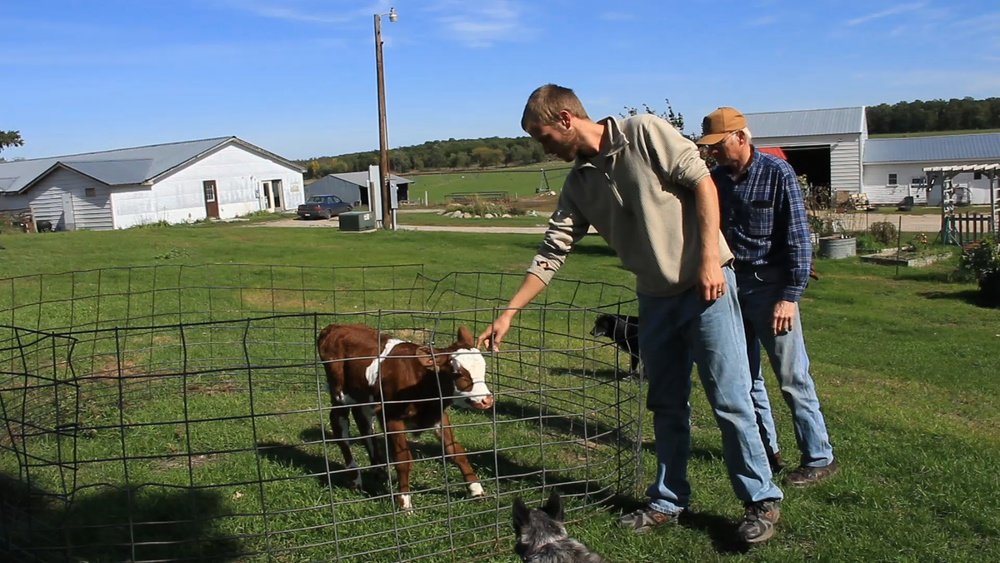 Josh and Dan Middendorf inspect a newborn calf.