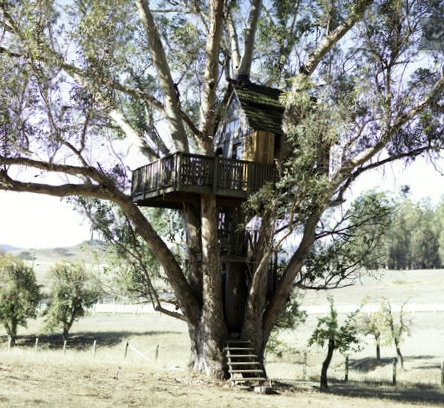 Treehouse at Swallowtail Studios in Petaluma, CA (rent on airbnb).