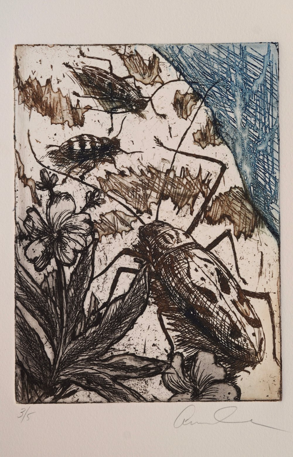 Anne Cook  Etching  Introduction to Printmaking