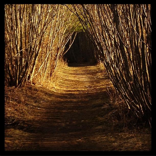 Beyond the Woods -B