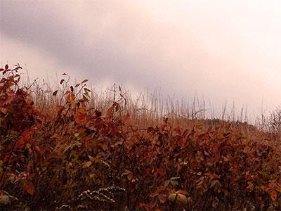 sidebmodeling_autumn.jpg