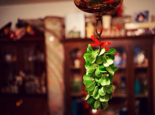 Mistletoe hung where you can see