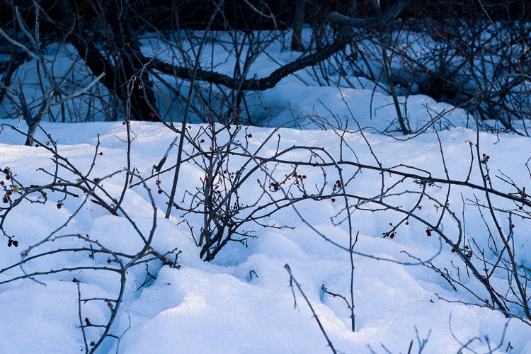 Splashesof color amidst the snow