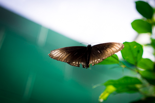 The flight of the butterfly