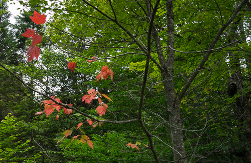 Calm down with the foliage in July mother nature...