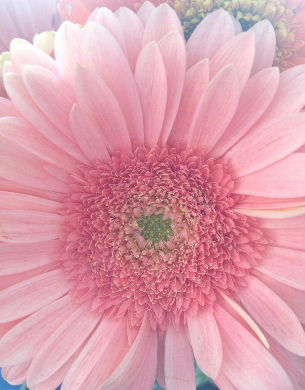 Flowers That We Love Lady Fleur