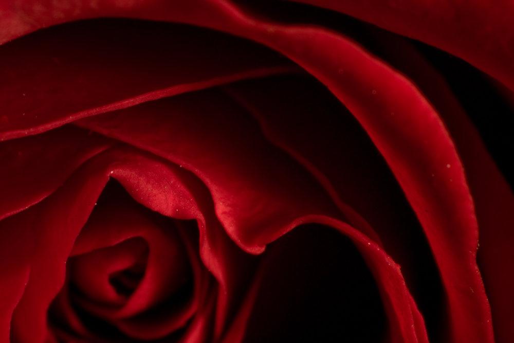 One Dozen Roses -