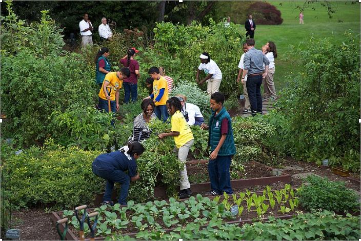 Annual Harvest    at the White House Kitchen Garden, Oct. 14, 2014.