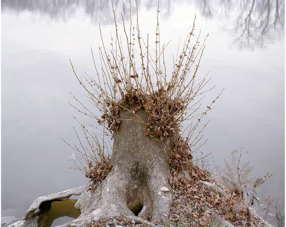 Stump, Great Miami River, Hamilton, OH