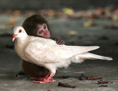 Bird and monkey.jpg