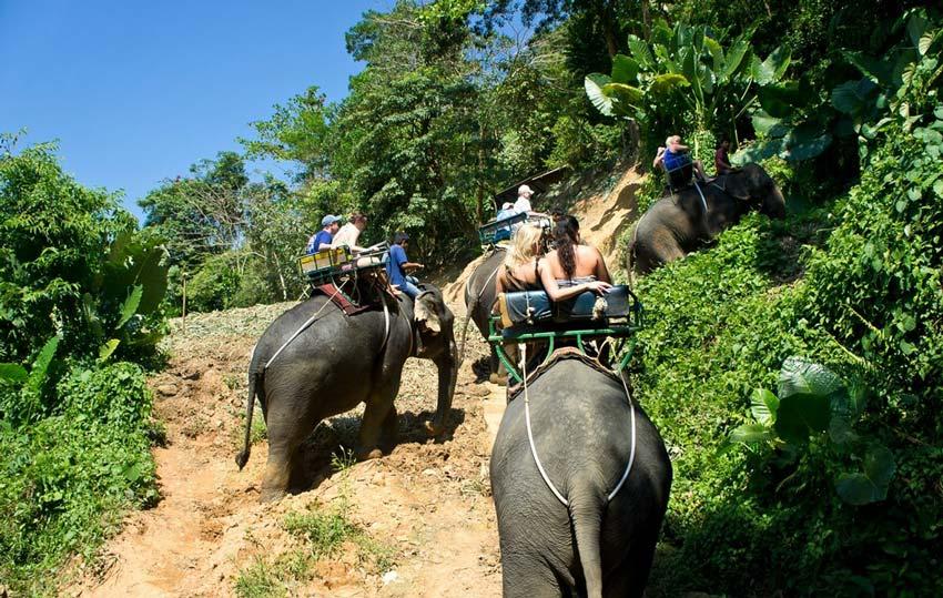 Прогкулка на слонах