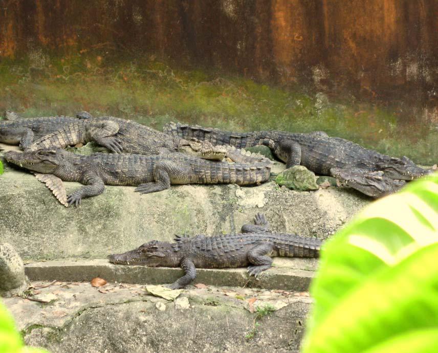Мини зоопарк - крокодилы
