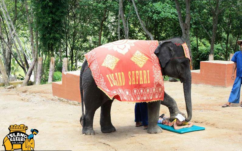 Массаж слоном
