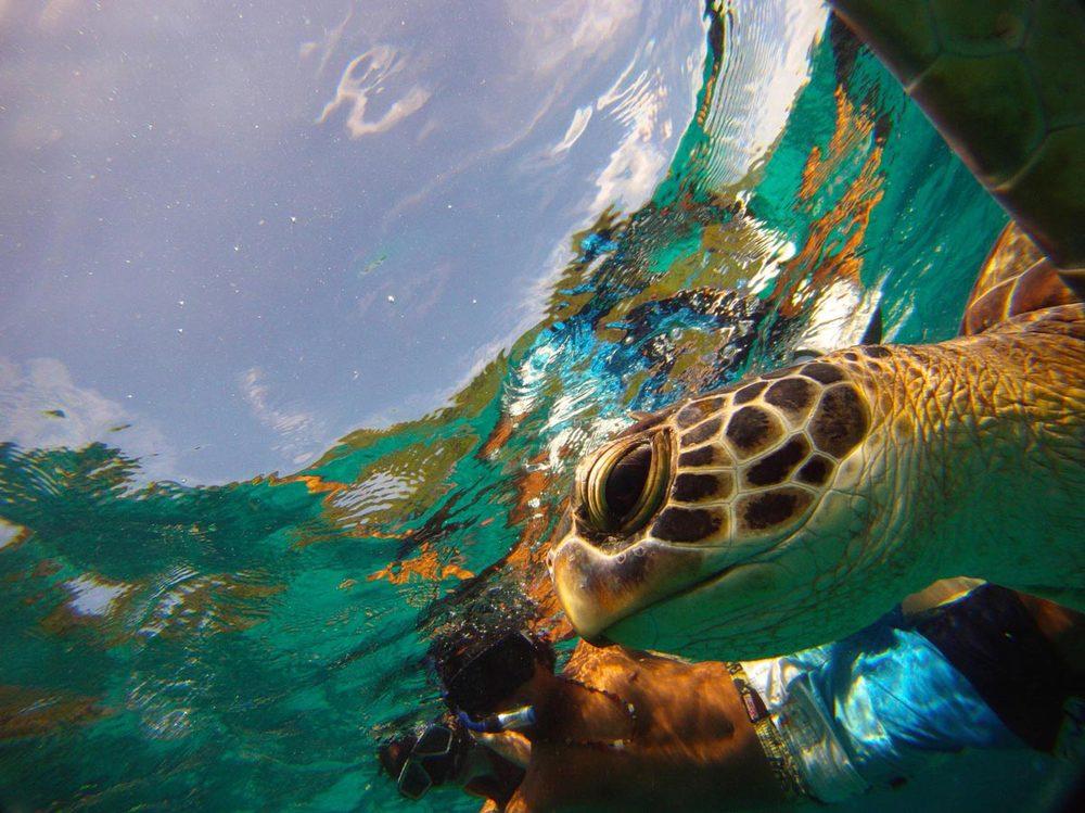 Симиланские острова- черепахи