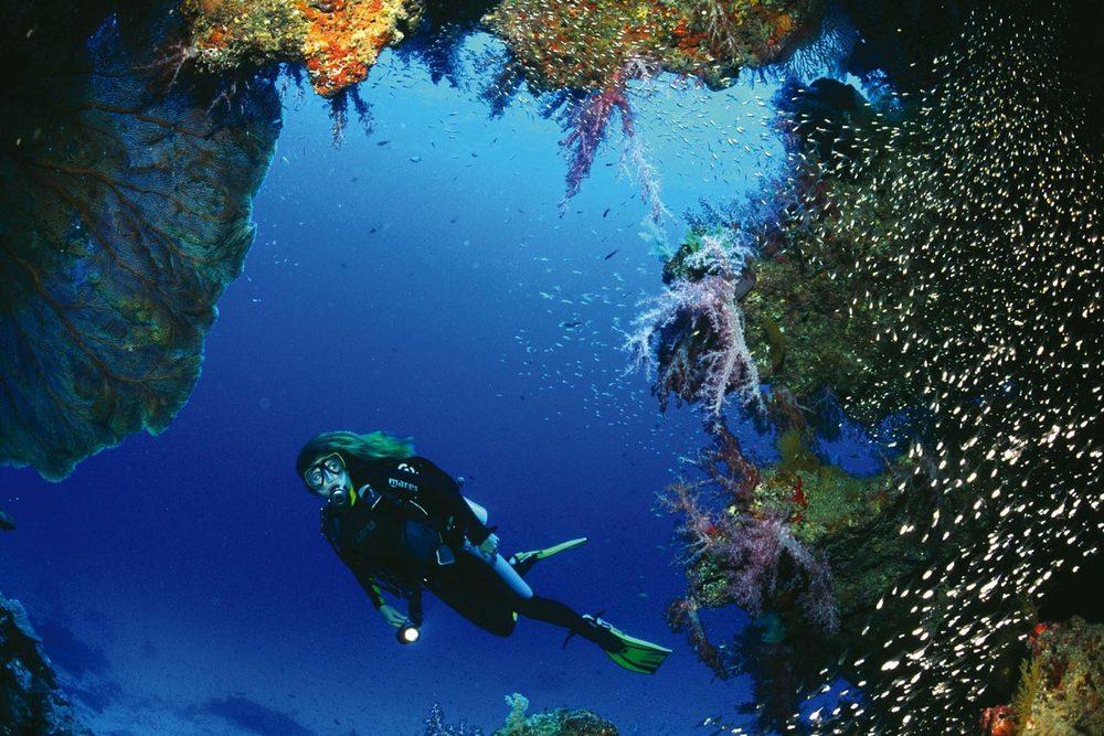 Подводный мирСимиланских островов! Смотрите страницу с дайвингом.