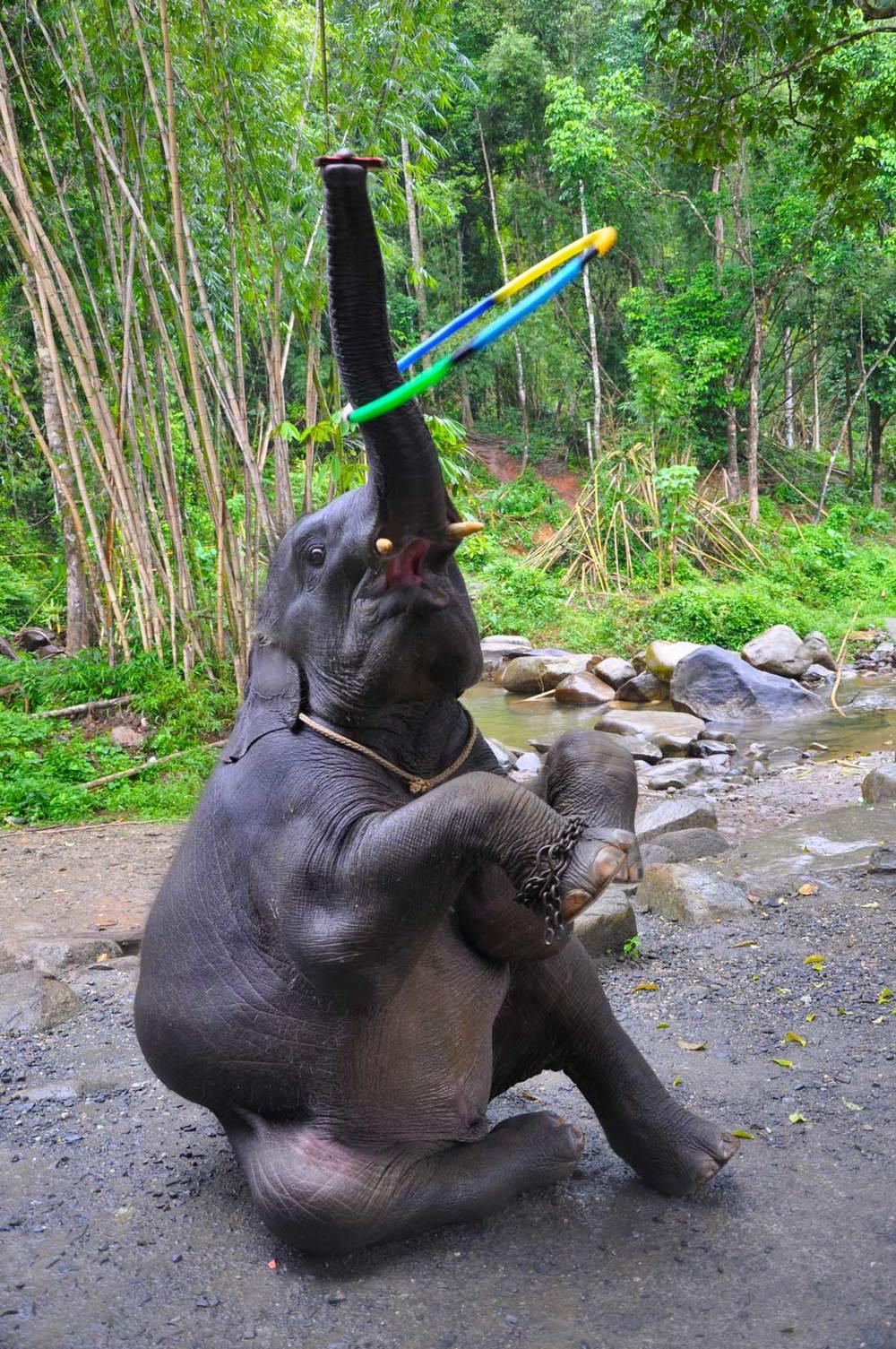 Шоу маленького слоненка