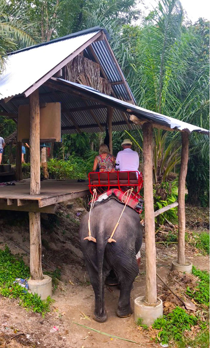 катание на слонах 30 мин