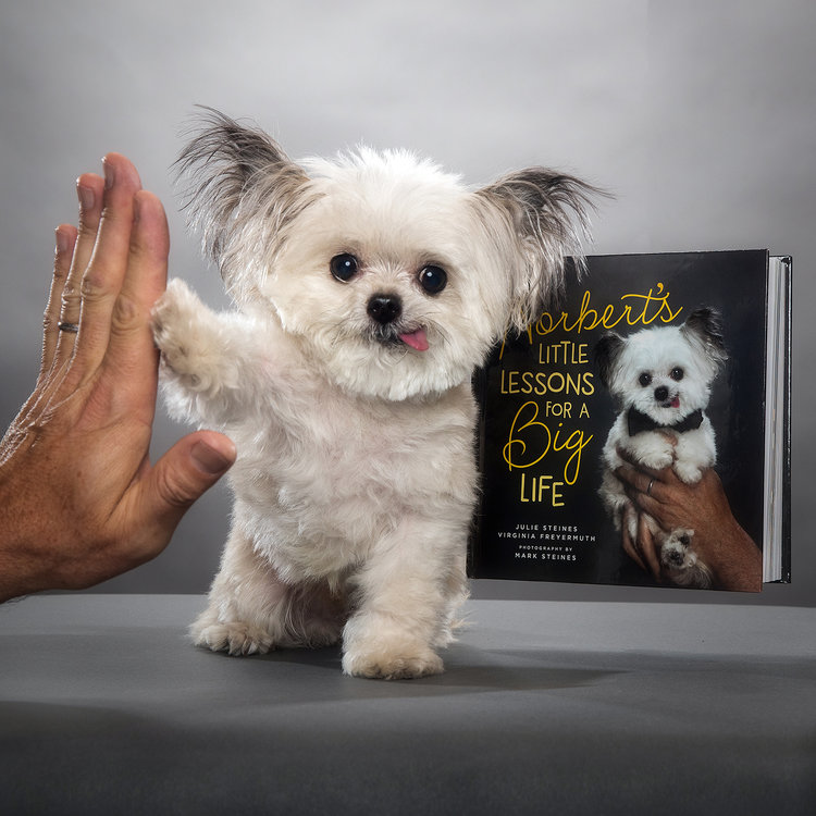 norbert s little lessons book polly parker press rh pollyparkerpress com little lessons from the saints 52 simple and surprising ways to see the saint in you little lessons big life journal