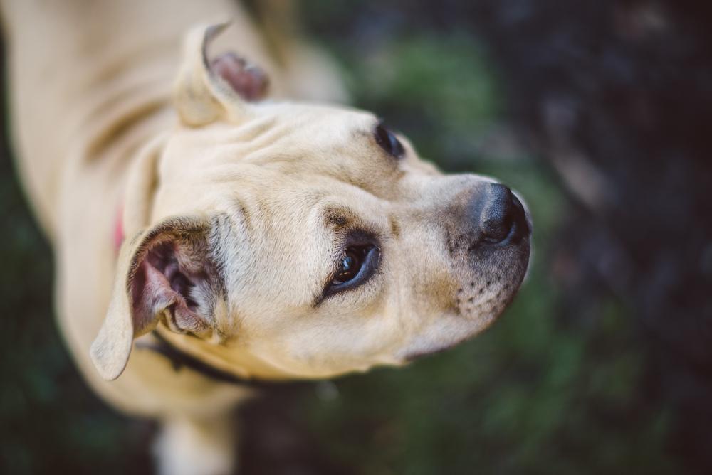 Dog-Days-002.jpg