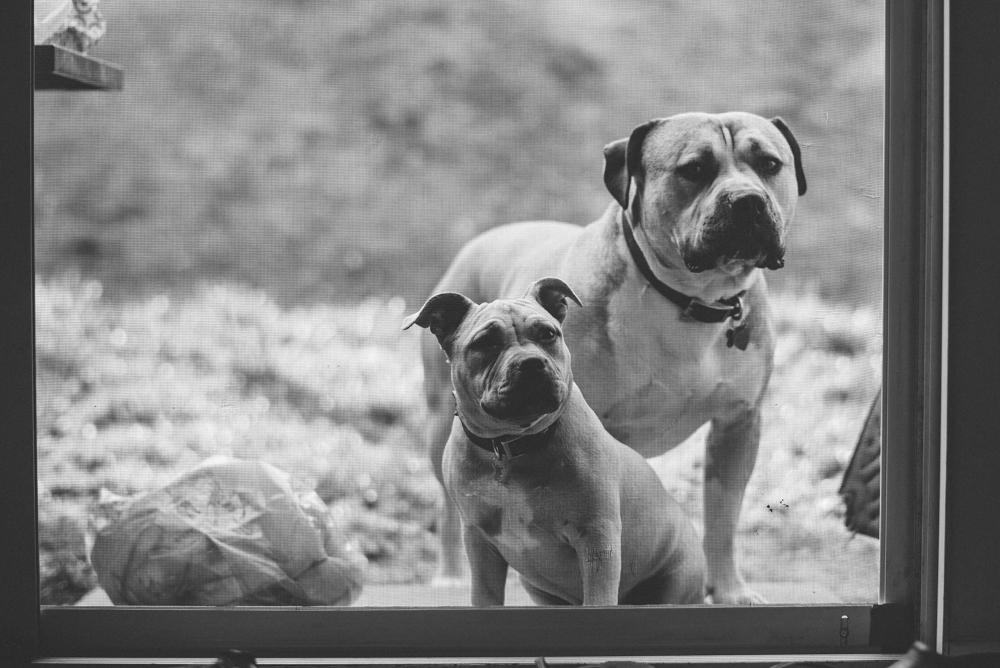 Dog-Days-008.jpg