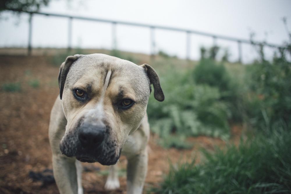 Dog-Days-010.jpg