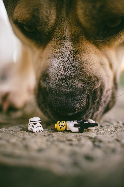 Dog-Days-012.jpg
