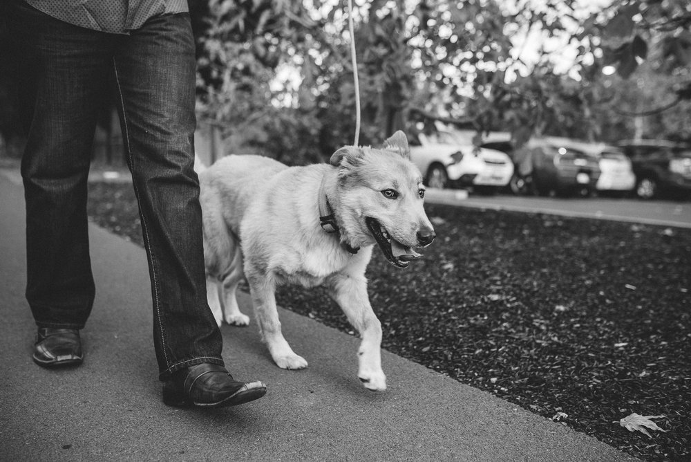 Yountville-Dog-Engagement-Photography-015.jpg