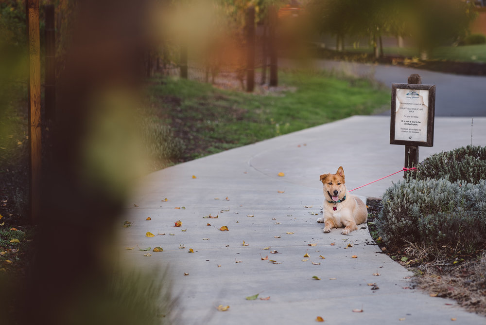 Yountville-Dog-Engagement-Photography-006.jpg