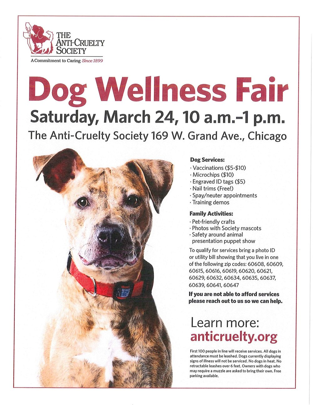 Dog Wellness Flyer.jpg